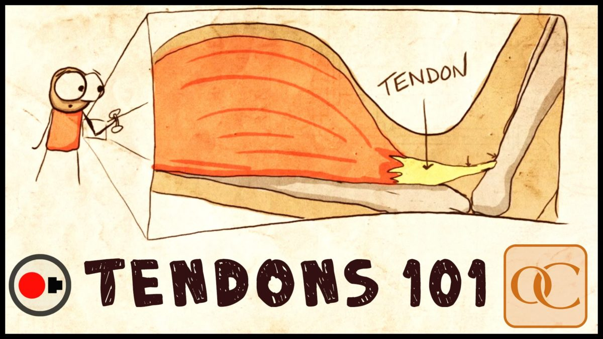 tendons-1200x676.jpg